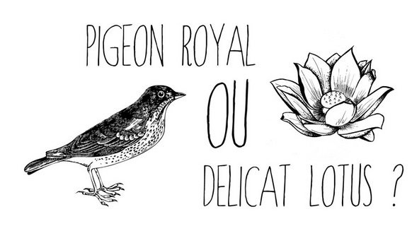 Pigeon royal ou délicat lotus