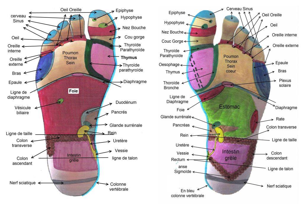 Carte des zones réflexes